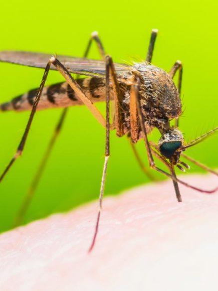Maestría Internacional en Enfermedades Tropicales Infecciosas Importadas (Diploma acreditado por Apostilla de la Haya)